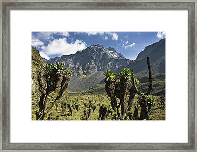 Mount Baker And Bujuku Bog, Rwenzori Framed Print by Martin Zwick