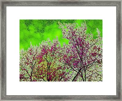Mount Fuji In Bloom Framed Print by Pepita Selles