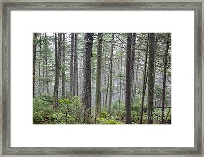 Mount Jim - Kinsman Notch New Hampshire Framed Print by Erin Paul Donovan
