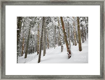 Mount Jim - Kinsman Notch New Hampshire Usa  Framed Print by Erin Paul Donovan