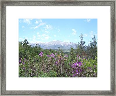 Mount Katahdin And Wild Flowers Framed Print by Joseph Marquis
