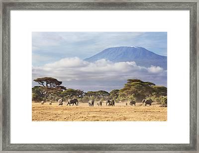 Mount Kilimanjaro Amboseli  Framed Print by Richard Garvey-Williams