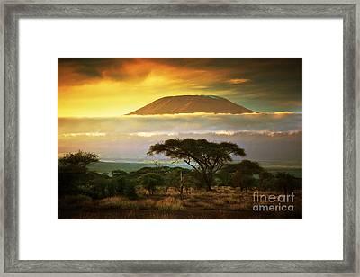 Mount Kilimanjaro Savanna In Amboseli Kenya Framed Print