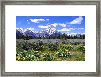 Mount Moran Wildflowers Framed Print by Brian Harig