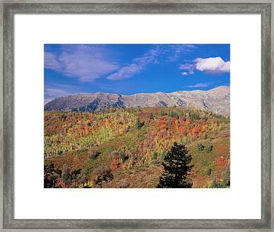 Mount Nebo Fall, Mount Nebo Scenic Framed Print by Howie Garber