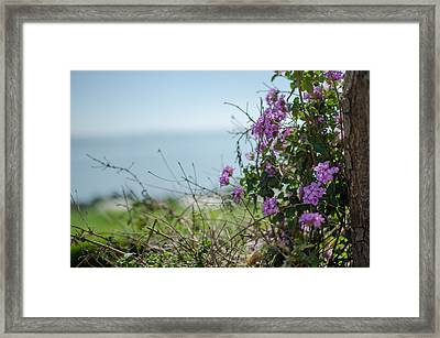 Mount Of Beatitudes Framed Print by David Morefield