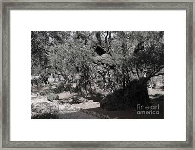 Mount Of Olives Framed Print