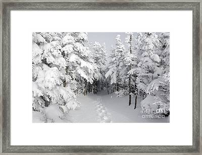 Mount Osceola Trail - White Mountains New Hampshire Framed Print
