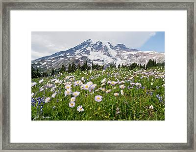 Framed Print featuring the photograph Mount Rainier And A Meadow Of Aster by Jeff Goulden