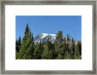 Framed Print featuring the photograph Mount Rainier Evergreens by Anthony Baatz