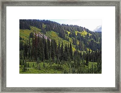 Framed Print featuring the photograph Mount Rainier Ridges And Fir Trees.. by Tom Janca