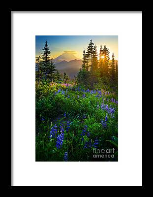 Mount Rainier Framed Prints
