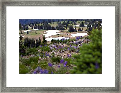 Framed Print featuring the photograph Mount Rainier Wildflowers by Bob Noble Photography