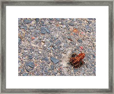Mount Saint Helen's Frog Froggy Framed Print