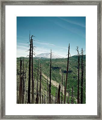 Mount St Helens Volcano And Dead Trees Framed Print by Library Of Congress