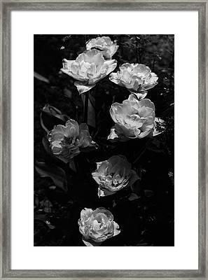 Mount Tacoma Tulips Framed Print