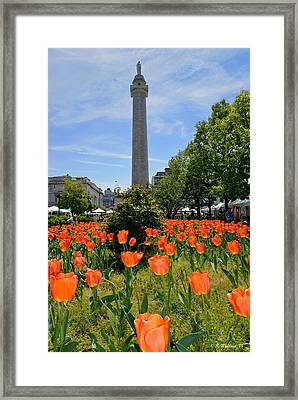 Mount Vernon Place Framed Print by Brian Wallace