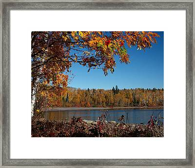 Mountain Ash In Autumn Framed Print by James Peterson