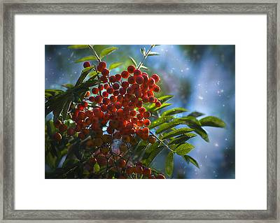 Framed Print featuring the photograph Mountain Ash by Yulia Kazansky