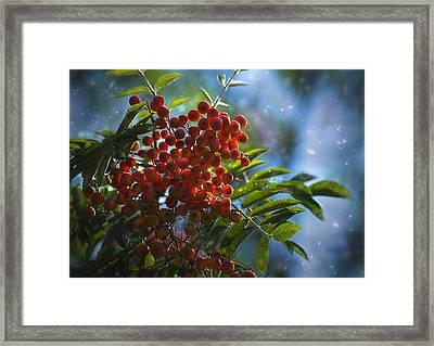 Framed Print featuring the photograph Mountain Ash by Yulia Kazansky