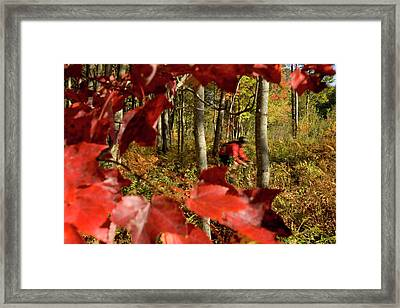 Mountain Bikers Ride In New Gloucester Framed Print