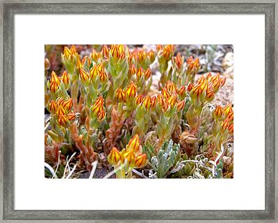 Mountain Blaze Framed Print