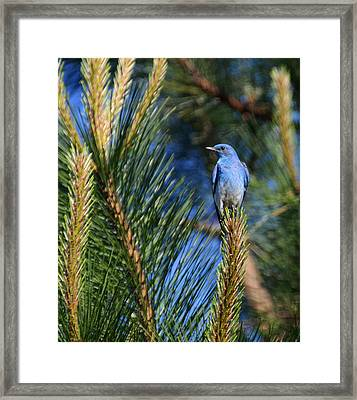 Mountain Blue Framed Print by Annie Pflueger