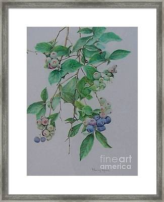 Mountain Blueberries Framed Print by Mary Lynne Powers