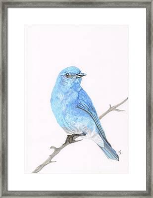 Mountain Bluebird Framed Print by Yvonne Johnstone