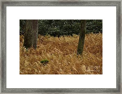 Framed Print featuring the photograph Mountain Carpet by Randy Bodkins