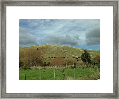 Mountain Cattle Framed Print by Ron Torborg