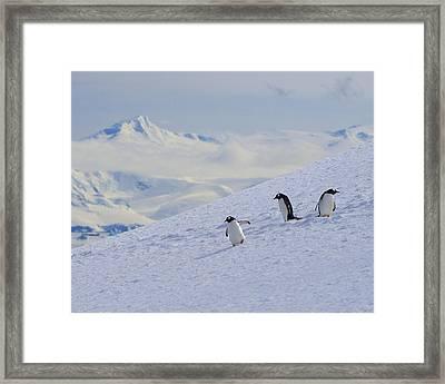 Mountain Climbers Framed Print