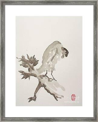 Mountain Cuckoo Eating A Worm Framed Print