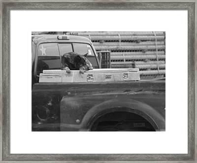 Mountain Dog Framed Print by Debra Roberts