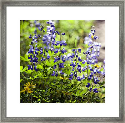 Framed Print featuring the photograph Mountain Flowers by Kjirsten Collier