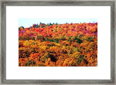 Mountain Foliage Series 015 Framed Print