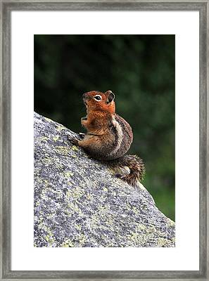 Mountain Friends Framed Print