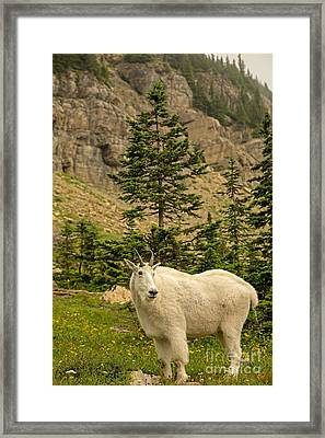 mountain goat country photographnatural focal point