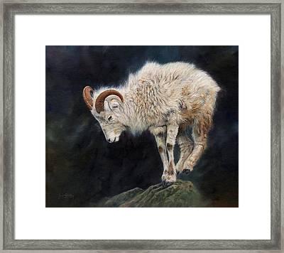 Mountain Goat Framed Print by David Stribbling