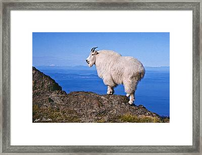 Framed Print featuring the photograph Mountain Goat On Klahane Ridge by Jeff Goulden