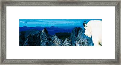 Mountain Goat Yukon Territory Canada Framed Print by Panoramic Images