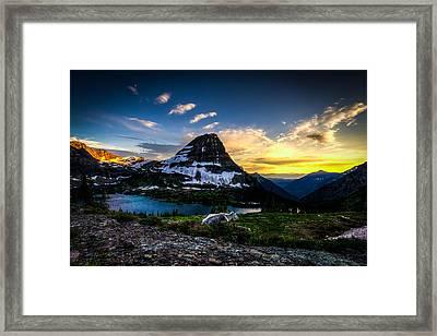 Mountain Goat's Paradise Framed Print