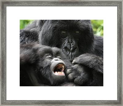 Mountain Gorilla Adf2 Framed Print