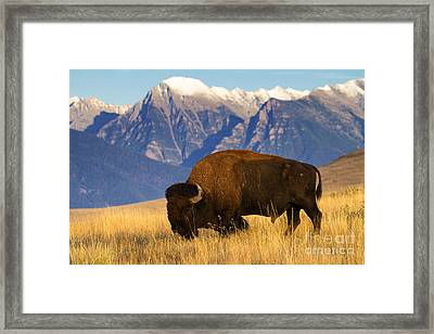 Mountain Grass Framed Print by Aaron Whittemore