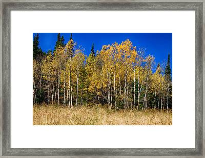 Mountain Grasses Autumn Aspens In Deep Blue Sky Framed Print by James BO  Insogna