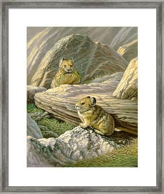 Mountain Haymakers - Pika Framed Print by Paul Krapf