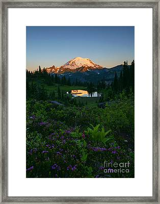 Mountain Heather Morning Framed Print by Mike Dawson