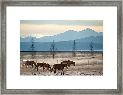 Wild Mountain Horses - Rocky Mountains Colorado Framed Print by Gregory Ballos