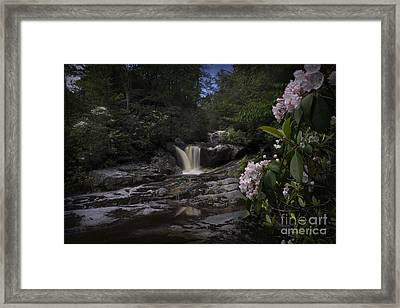 Mountain Laurel And Falls On Small Stream Framed Print by Dan Friend