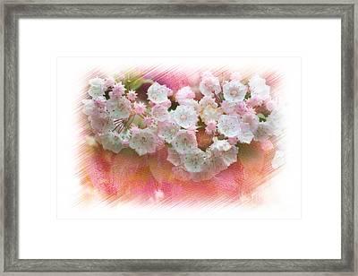 Mountain Laurel Flowers Framed Print by Dan Friend
